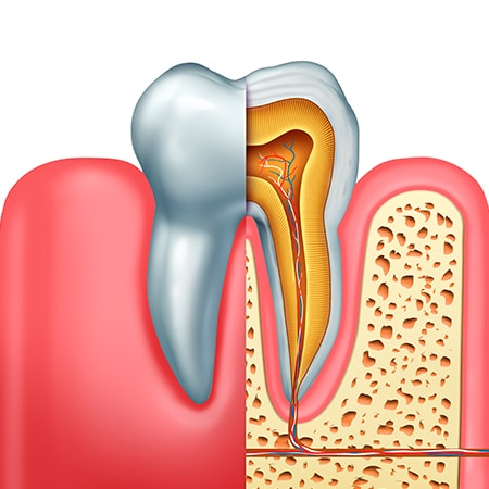 A 3D illustration of a root canals